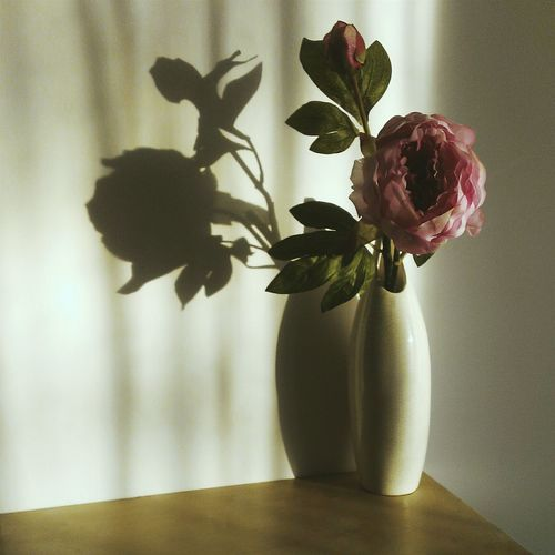 Peony in vase on table