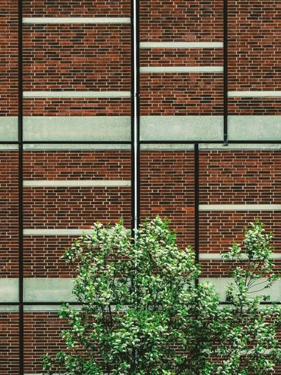 Minimalistic moods Architectural Detail Architecture Architecturelovers Brick Brick Wall Bricks Clean Minimal Minimalistic Minimlism Tree Wall