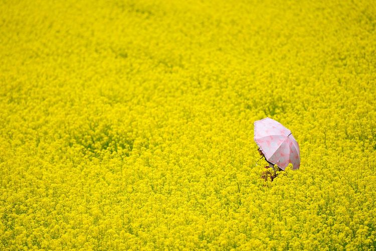 Close-up of fresh yellow flower in field