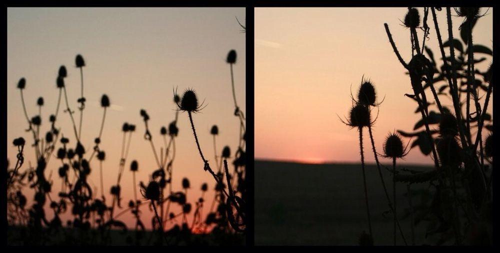 A lot of memories ?☺️✌️ Sunset Relaxing Memories Staypositive