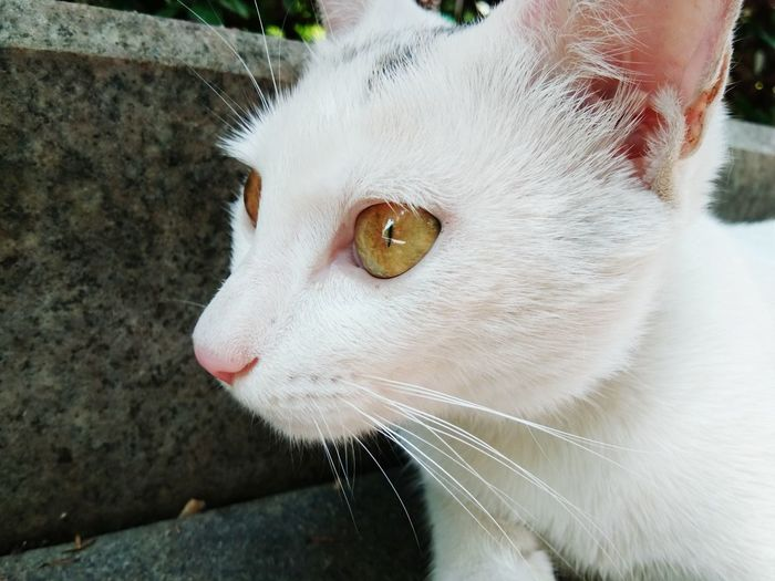 A cute cat Crafted Beauty