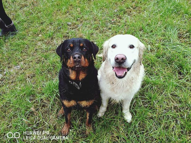 Dog Doglife Sempreingiro Scampagnata Happy Time Love Solosorrisi Argo&kira Bestfriend