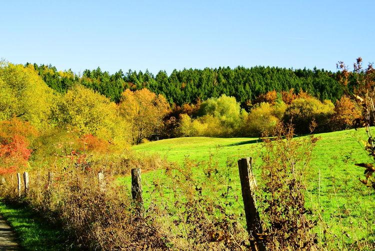 Autmn Fall Trees Landscape Breinig
