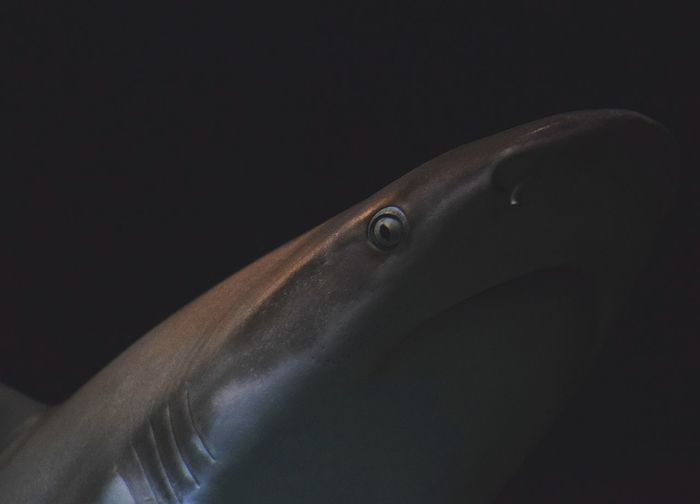 shark Sharkbay Sharkie Sharkfin Sharktattoo Sharkfacegang Sharkattack Sharksquad Sharktooth Sharkboy Sharky Sharkies Sharknado Prilaga Sharks Shark Beautifull Strong