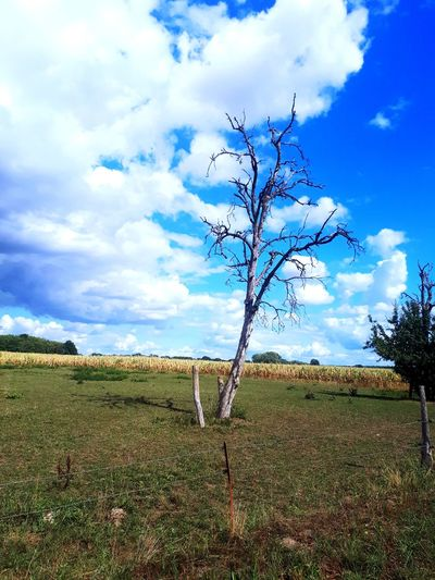 Dead tree in front of an wheatfield Countryside Vellahn Sonnig Sunny Outside Field ARTfoxHH Tree Rural Scene Agriculture Sky Plant Cloud - Sky Landscape Bare Tree Dead Plant Dead Tree Farmland EyeEmNewHere