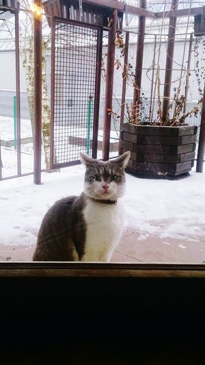 Taking Photos Lola Cat Cute Cat Kitty Let Me In SO COLD I'll Kill You Evil Look  Winter Cat w Krakow