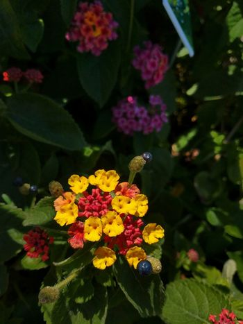 Small garden. Yellow And Red Flowers Tucked Away Pay Attention To The Little Things Pretty Flowers Playing With Focus
