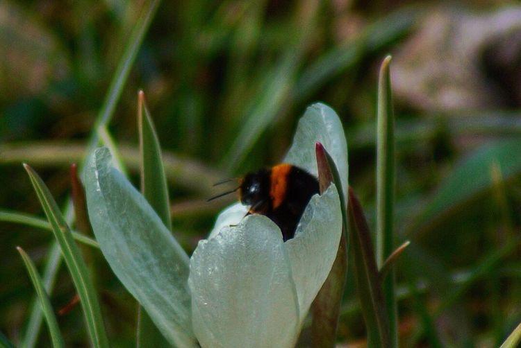 Bee Green Amazing Bees Bee EyeEmNewHere