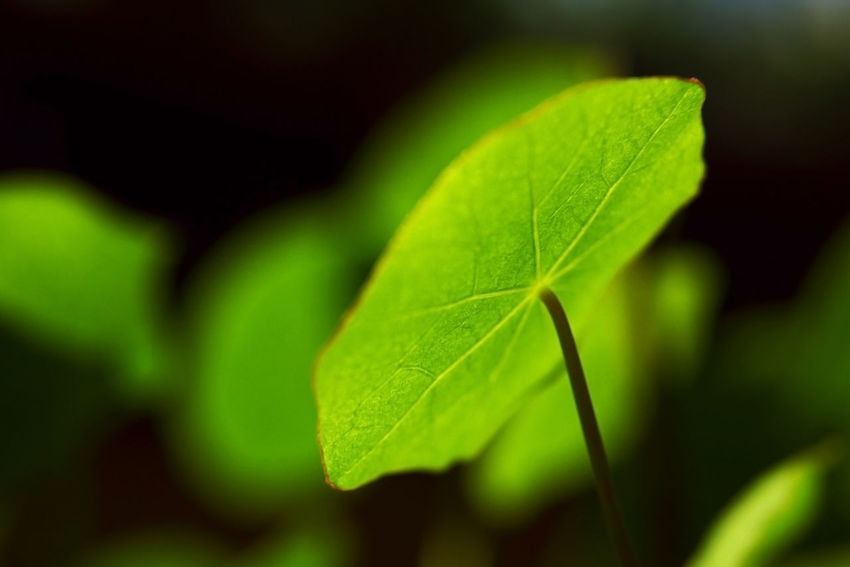 new life in spring Beauty In Nature Black Background Close-up Day Freshness Glow Green Color Growth Leaf Life Nature No People Outdoors Plant Spring Flowers Summer Veins Veins In Leaves