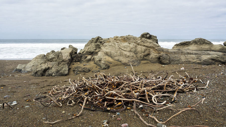 USA 2015 4 Sea Beach Land Sky Water Nature Tranquility Beauty In Nature Rock Scenics - Nature Solid Tranquil Scene No People Day Horizon Rock - Object Horizon Over Water Non-urban Scene Plant Outdoors Driftwood Dead Plant