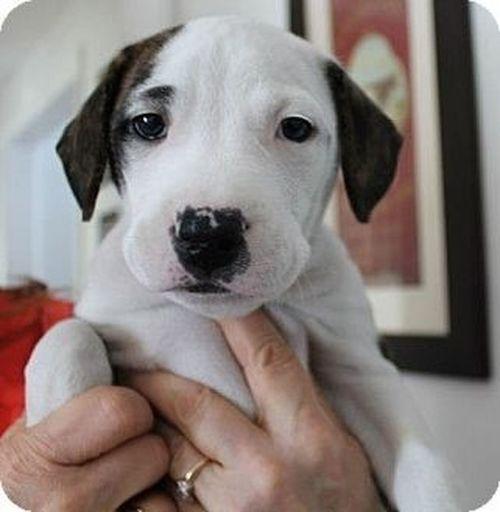I Need This Dogg<3