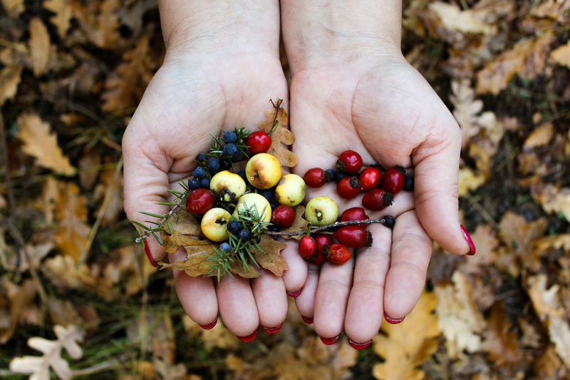 Close-up of hand holding berries