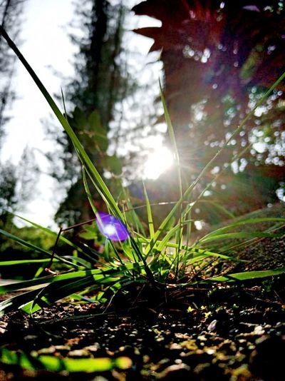 Blade Of Grass Young Plant Sun