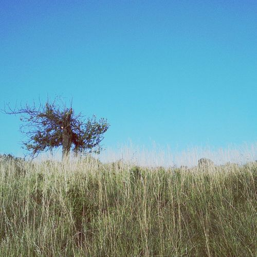 Tree. Landscape Grassland Croatia Early Morning