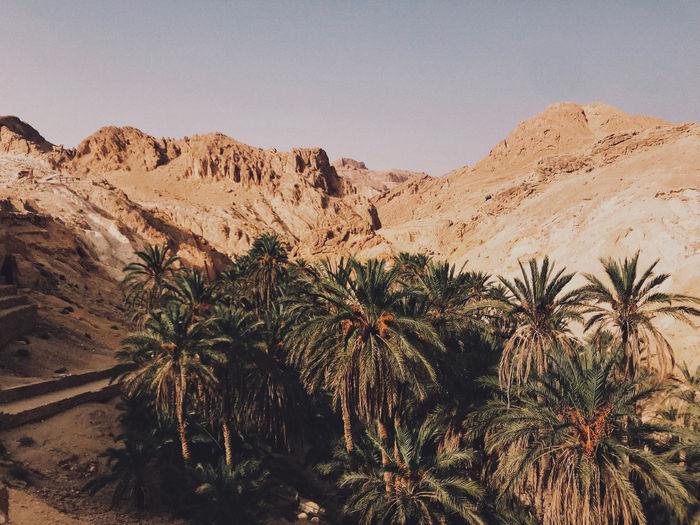 Palm trees in desert against sky