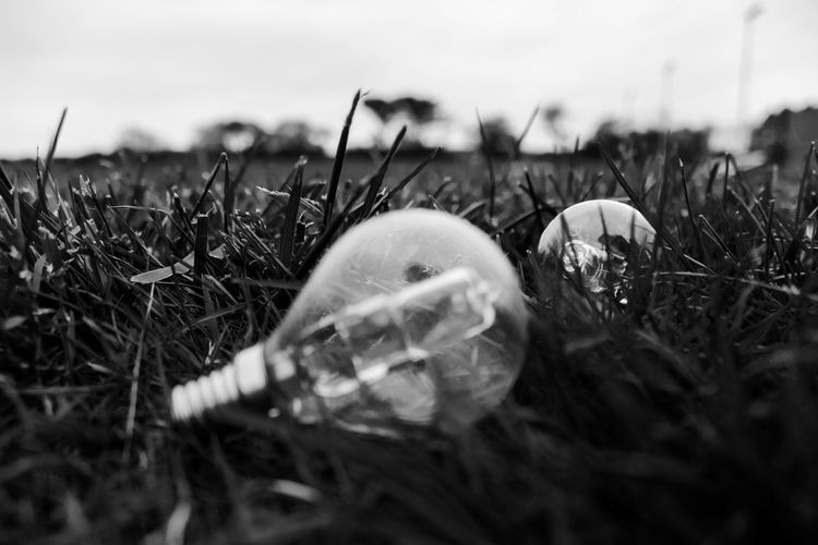 #blackandwhite #bored #Dark #depth Of Field #depthoffields #electricity #light Bulb #outside Close-up Day Field Grass Growth Nature No People Outdoors