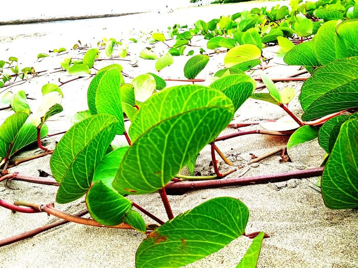 leaf Leaf Sunlight Close-up Plant Animal Themes Green Color