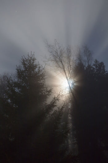 Beauty In Nature Fog Forest Mist Moon Mystic Nature Night Outdoors Rural Stars Super Moon Sweden