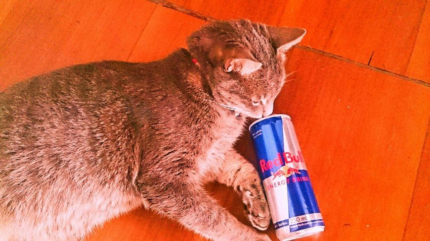 Cute Pets Relaxing My Cat! Cat RedBull