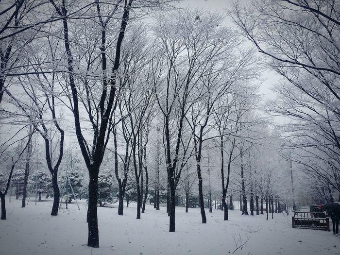 Snow Usw University Of Suwon White Tree Winter 와우리스키장 내일은 빙판 폭설 December