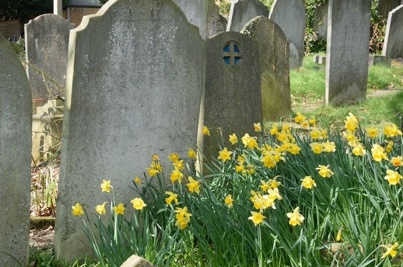Flower Grave Cemetery Religion Daffodil Tombs Death Regeneration Spring Flowering Plant Graves Yellow Nature Beauty In Nature Contrast
