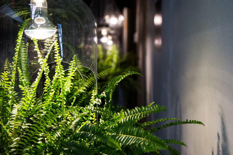 Plant Plant Part Green Color Leaf Growth Nature Lighting Equipment No People Focus On Foreground Close-up Glass - Material Selective Focus Day Outdoors Potted Plant Transparent Glass Illuminated Freshness Ecofriendly Enviroment Friendly