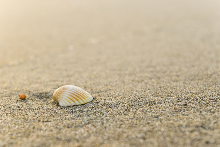 Sea shells Relaxing Animal Shell Animal Themes Animal Wildlife Animals In The Wild Beach Beauty In Nature Close-up Day Fragility Gastropod Hermit Crab Nature One Animal Outdoors Sand Sea Sea Life Seashell Snail