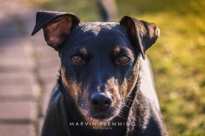 Check This Out Dog Photography Eye Em Nature Lover