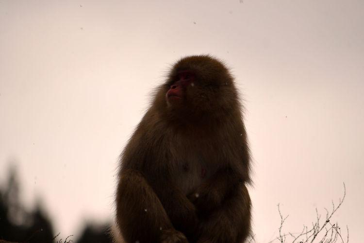 Monkey sitting on snow against sky