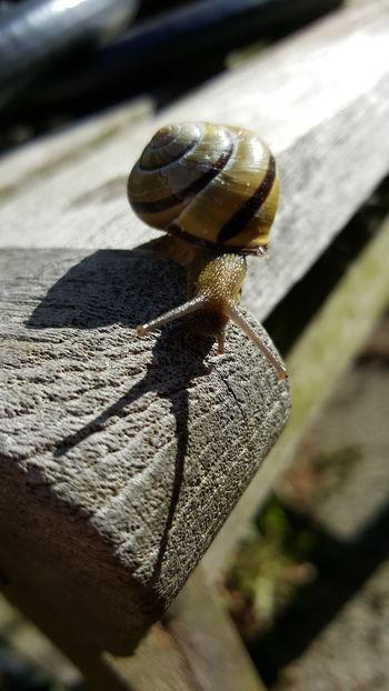 Snail Snail Snail Photography Garden Snails Snails Pace Slow Shadow Shadows Antennae Shell Snail Shell