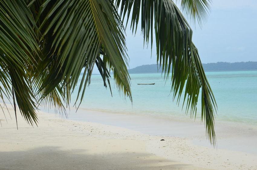 Andaman And Nicobar Islands Andaman Sea Andamanen Andamanislands Beach Beauty In Nature Idyllic India India Travel Diaries Indian Ocean Indien Meer Nature Ocean Palm Leaf Palm Tree Palm Tree Palme Paradise Paradise Beach Sand Sea STAND