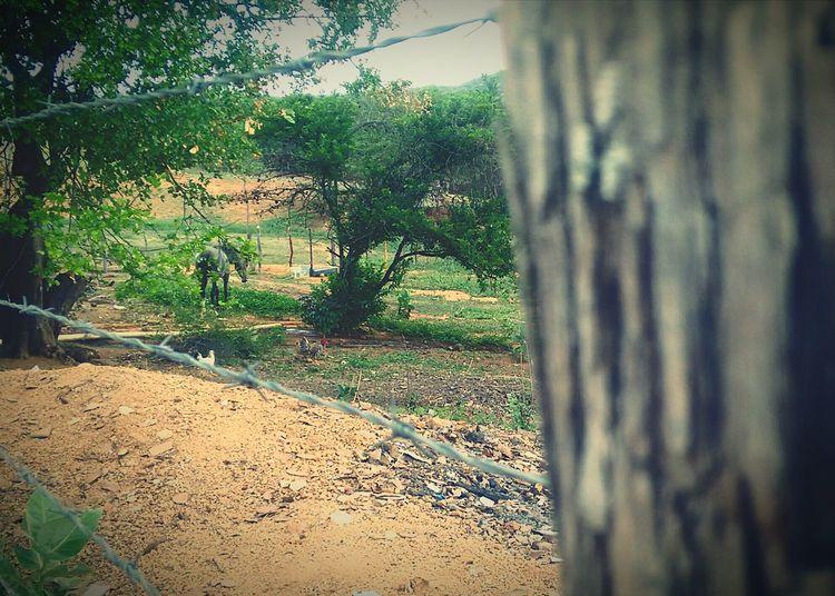 Sertão verde. Nature No People First Eyeem Photo Day
