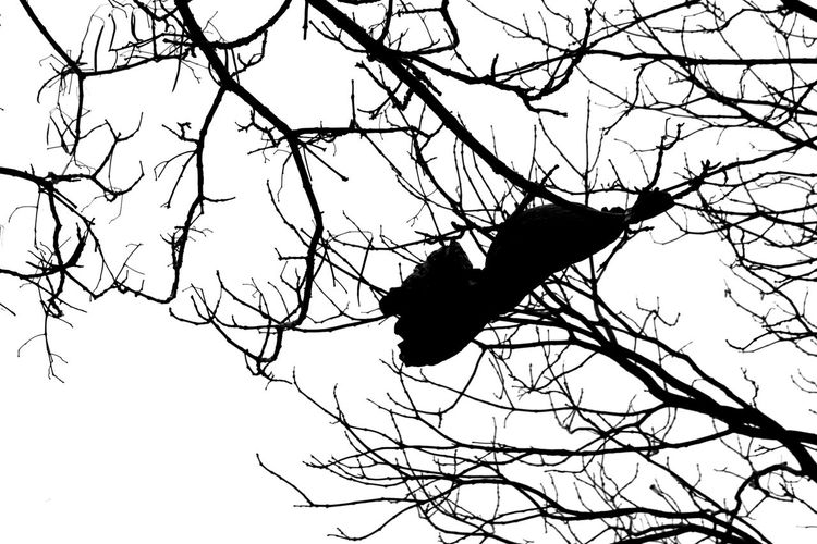 Beauty In Nature Blackandwhite Branch Day Low Angle View Monochrome Nature Outdoors