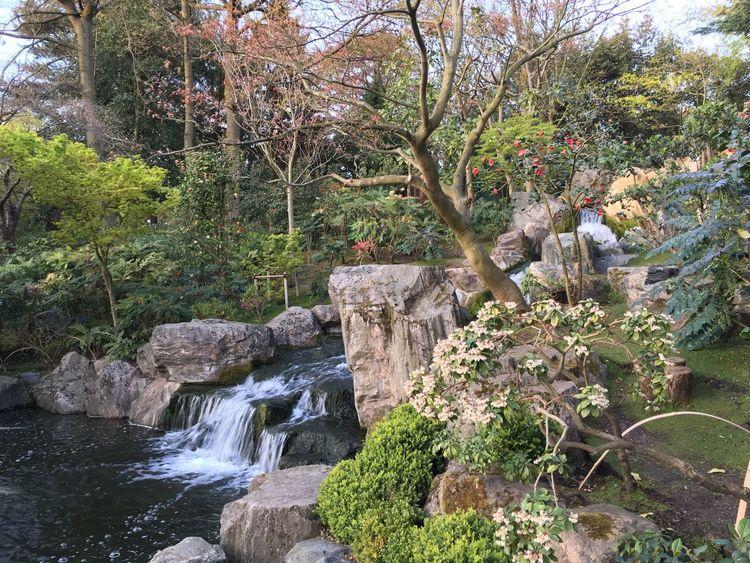 (null)Oriental Gardens Holland Park, London Holland Park Japanese Garden Public Gardens Public Garden Landscape Landscape_Collection Lanscape Photography