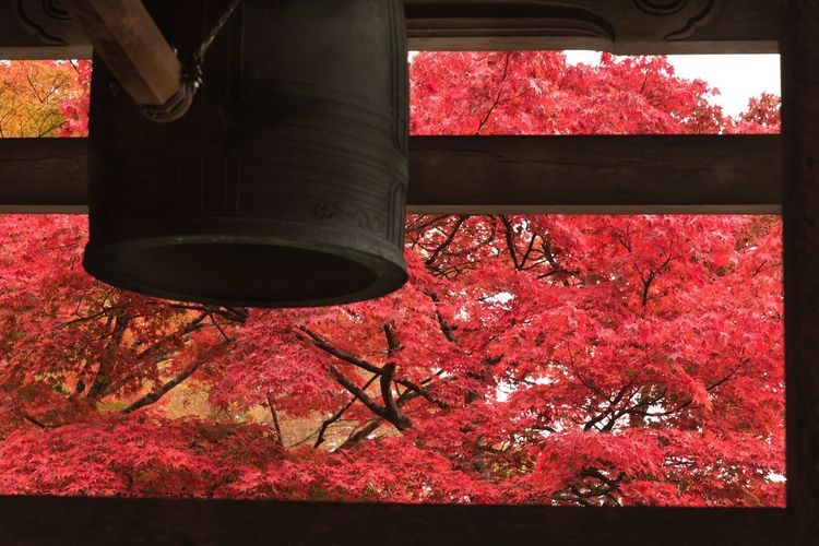 紅葉 梵鐘 鐘 Red 真っ赤 Japan Photography ファインダー越しの私の世界 写真で伝えたい Eyemphotography EyeEm Japan Beauty In Nature EyeEm Nature Lover 11月 Autumn Temple