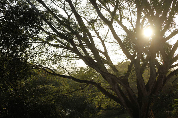 El Valle Panamá Tree Plant Beauty In Nature Tranquility Nature No People Forest Land Growth Day Sky Sunlight Low Angle View Scenics - Nature Outdoors Tranquil Scene Non-urban Scene Sun Back Lit Branch Tree Canopy  Streaming Solar Flare Bamboo - Plant