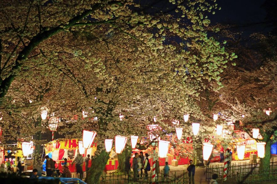 Tree Patriotism Outdoors Large Group Of People Fan - Enthusiast People Day Nature Sakura Cherry Blossoms Beauty In Nature Sakura Flower Sakura☆cherry Blossam City Life Real People City
