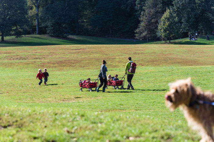 Brooklyn Children Children Photography Dogs Field Grass Green Color Kids Playing Lawn Leisure Activity Lifestyles New York New York City Outdoors Parents Parents And Children Park Playing Prospect Park Real People Relaxation Relaxing Togetherness USA Youth Of Today