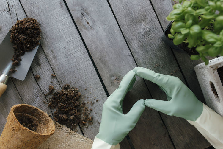 Gardening hobby concept. hands in gloves, heart shape, eco pot, plant with dirt, wooden background