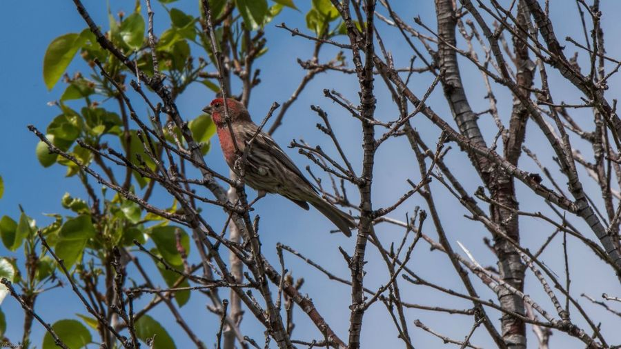 Bird enjoying the morning sun Vertebrate Tree Animals In The Wild Animal Plant Animal Wildlife Animal Themes Bird Branch One Animal Perching Low Angle View Nature Day No People Growth Sky Outdoors Clear Sky Beauty In Nature