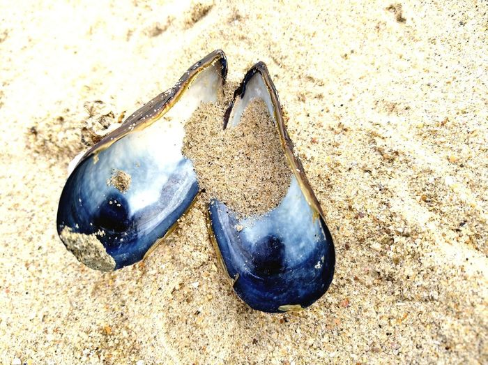 Beauty In Nature Shell Blue Shell Beach Sand Pair Shoe High Angle View Still Life Close-up