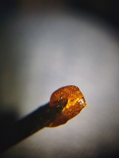 Freshly Pressed Rosin Dab Rosin EyeEm Selects Joints FSE Thc CBD Cannabis Weed Shatter Dabs Toronto Marijuana Concentrates Close-up Droplet Detail Drop