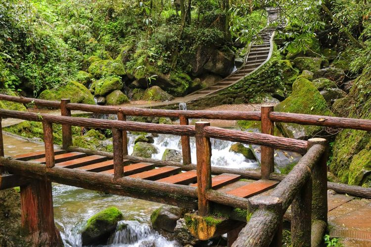 Footbridge over river amidst trees in forest