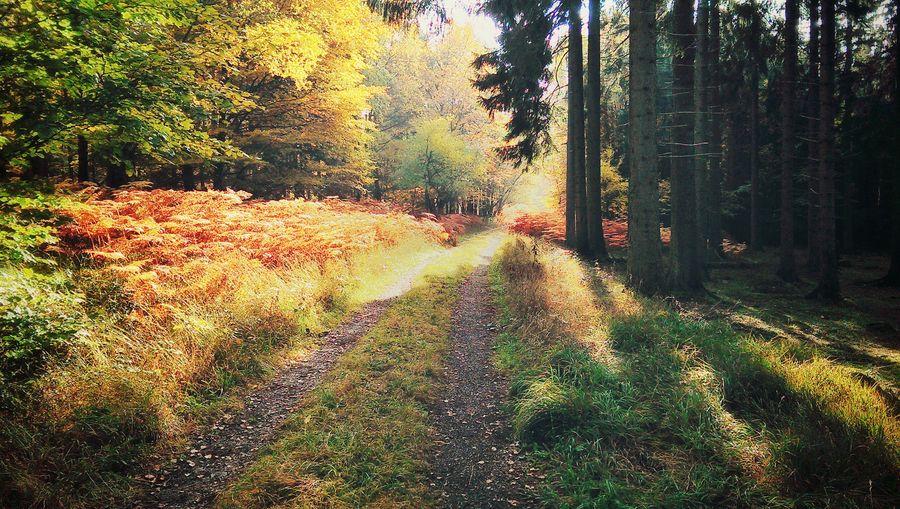 Nationalpark Eifel Forest Road Path Germany