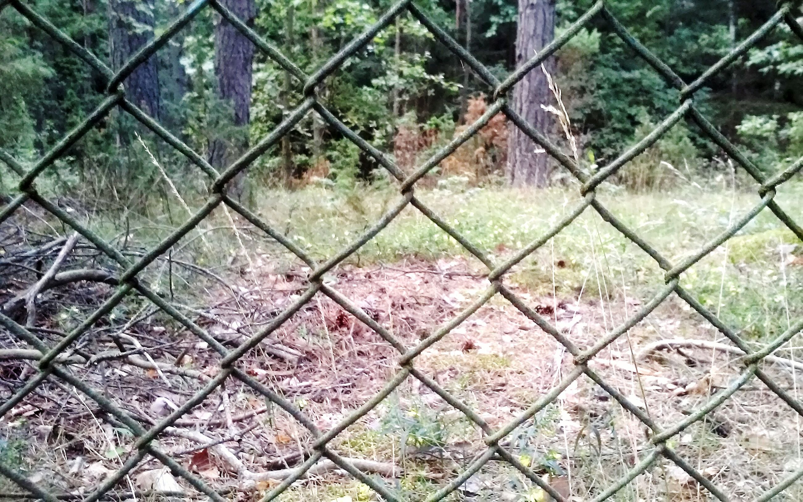 chainlink fence, fence, full frame, backgrounds, tree, protection, safety, pattern, growth, nature, security, field, metal, day, outdoors, grass, high angle view, plant, tranquility, no people