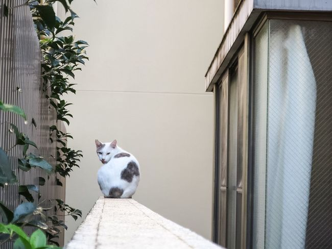 Stray Cat One Animal No People Day Outdoors Cat Lovers Domestic Animals Cat Domestic Cat