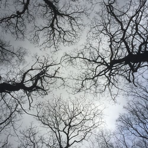 Trees in silhouette Silhouette Tree Bare Tree Branch Nature Beauty In Nature Low Angle View Outdoors Sky No People Day Tranquil Scene