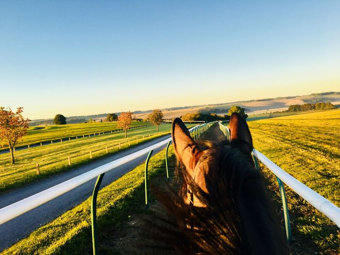 The best view Racehorse Sky Clear Sky Nature Mammal Copy Space Domestic Pets Animal Animal Themes Domestic Animals Landscape Field Land Sunlight Road Day