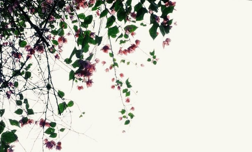Missing you... EyeEmNewHere Growth Plant Leaf Nature Branch Tree Flower Fragility Freshness Ivy No People Beauty In Nature Outdoors Day Close-up Sky