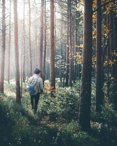 Man fashion backpacker wearing a denim jacket, black hat and black jeans exploring the forrest while running into amazing light on a beautiful autumn morning, Covasna, Romania Fashion Hat Light Adult Adventure Backpack Beauty In Nature Day Denim Forest Forrest Full Length Growth Hiking Jacket Leisure Activity Men Nature Outdoors People Real People Rear View Tree Tree Trunk WoodLand